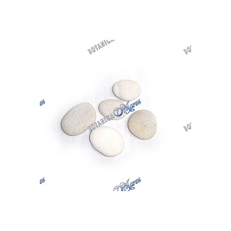 "Small White River Stones 1""-3"" aprox"