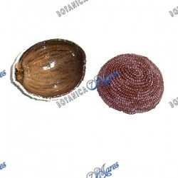 Oya Beaded Gourd Cocont Shell