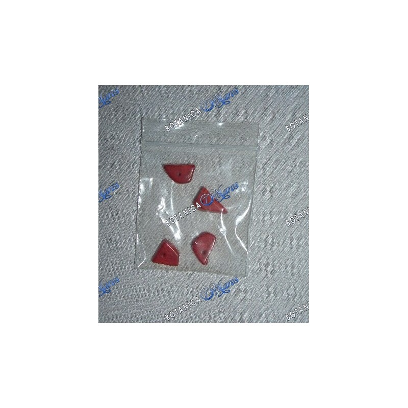SHELLS AND CORALS > Red Coral - 4 Pieces Pack Small