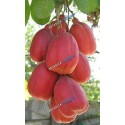Seso Vegetal (Akee Fruit) (1)