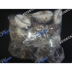 Tiger Cowry Shell package 2 pounds