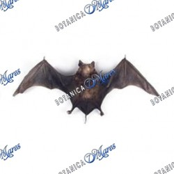 Bat (small & dried)
